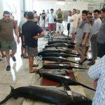Visverkoop in de vismijn van Garrucha